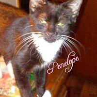 Adopt A Pet :: Penelope - York, PA