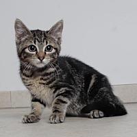 Adopt A Pet :: Topanga C170324 - Eden Prairie, MN