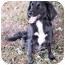 Photo 2 - Border Collie/Cocker Spaniel Mix Dog for adoption in Waterbury, Connecticut - Kristen
