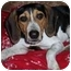 Photo 3 - Beagle Mix Puppy for adoption in Elk Grove, California - Buster