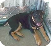 Shepherd (Unknown Type) Mix Dog for adoption in Silver City, New Mexico - Bagrim
