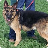 Adopt A Pet :: TRUCKER - Tully, NY