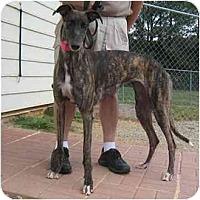 Adopt A Pet :: Ropes - Oak Ridge, NC