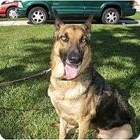 Adopt A Pet :: Cheyenne - Green Cove Springs, FL