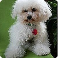 Adopt A Pet :: Jesse - New Milford, CT