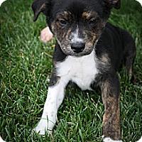 Adopt A Pet :: Boulder - Broomfield, CO