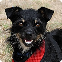 Adopt A Pet :: Wiggles - Weatherford, TX