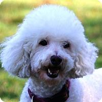 Adopt A Pet :: Maddie - La Costa, CA
