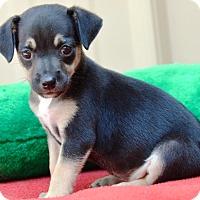 Adopt A Pet :: Mikaela - Pleasant Plain, OH