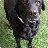 Adopt A Pet :: Ebony D - Torrance, CA