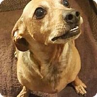 Adopt A Pet :: Rosco - Decatur, GA