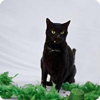 Adopt A Pet :: Trick - Jefferson, NC
