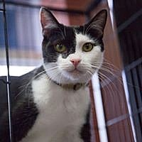 Adopt A Pet :: Fudge - Lorain, OH