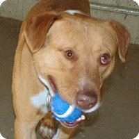 Adopt A Pet :: Reb - Ruidoso, NM
