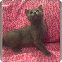 Adopt A Pet :: Fern - Mt. Prospect, IL