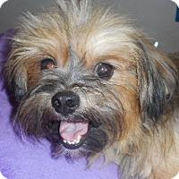 Adopt A Pet :: CS-7 - Yucaipa, CA