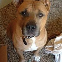 Adopt A Pet :: Pumba - Marietta, GA