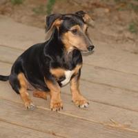 Adopt A Pet :: sprout - benton, TN