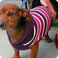 Adopt A Pet :: JJ - GA - Jacobus, PA
