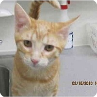 Adopt A Pet :: Beanie - Los Angeles, CA