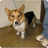 Adopt A Pet :: Wilfred - Inola, OK