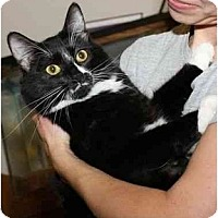 Adopt A Pet :: Lina - Davis, CA
