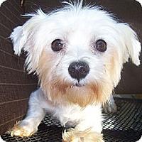 Adopt A Pet :: WD - CAPE CORAL, FL