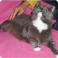 Adopt A Pet :: Mia - Richmond, VA