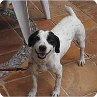 Adopt A Pet :: Elvis - Albuquerque, NM