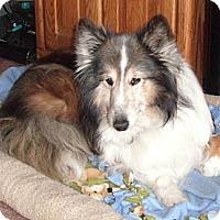 Adopt A Pet :: Shelby - La Habra, CA