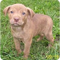 Adopt A Pet :: Malbec - Plainfield, CT