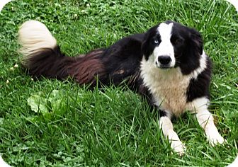 Border Collie Mix Dog for adoption in Richmond, Virginia - Tizzy - ADOPTED