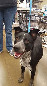Terrier (Unknown Type, Medium) Mix Dog for adoption in Fresno, California - Summer
