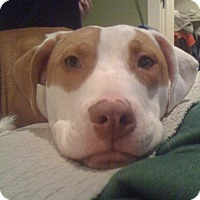 Adopt A Pet :: Masterful Monte - Issaquah, WA