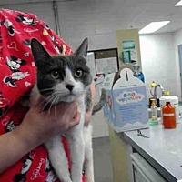 Adopt A Pet :: A141814 - Salinas, CA