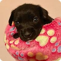 Adopt A Pet :: Vesant - North Brunswick, NJ