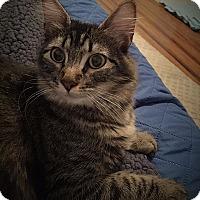 Adopt A Pet :: Misty - Keller, TX