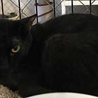 Adopt A Pet :: Willow - Fallbrook, CA