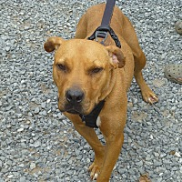 Adopt A Pet :: Ella - West Grove, PA