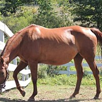 Adopt A Pet :: GINGER - Methuen, MA