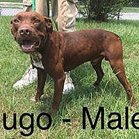 Adopt A Pet :: Ugo - Waycross, GA