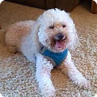 Adopt A Pet :: Ugg - Rockaway, NJ