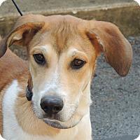 Adopt A Pet :: Hammy - Hagerstown, MD
