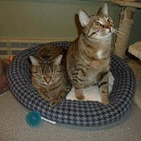 Adopt A Pet :: **Alpha and Omega (Bonded Pair) - Montello, WI
