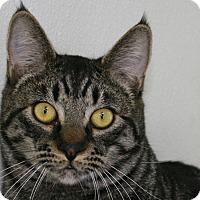 Adopt A Pet :: Lamont - Republic, WA