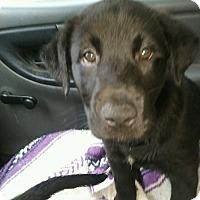 Adopt A Pet :: Penelope - Acworth, GA