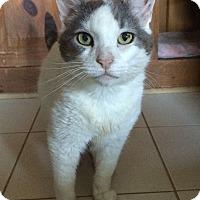 Adopt A Pet :: Paula - Middletown, NY