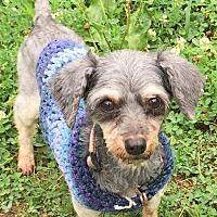 Adopt A Pet :: Keira - Joplin, MO