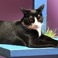 Adopt A Pet :: Luna - Topeka, KS