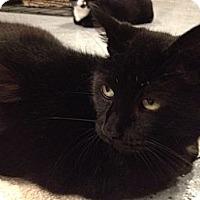 Adopt A Pet :: Martha - Byron Center, MI